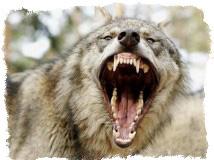 Пасть волка