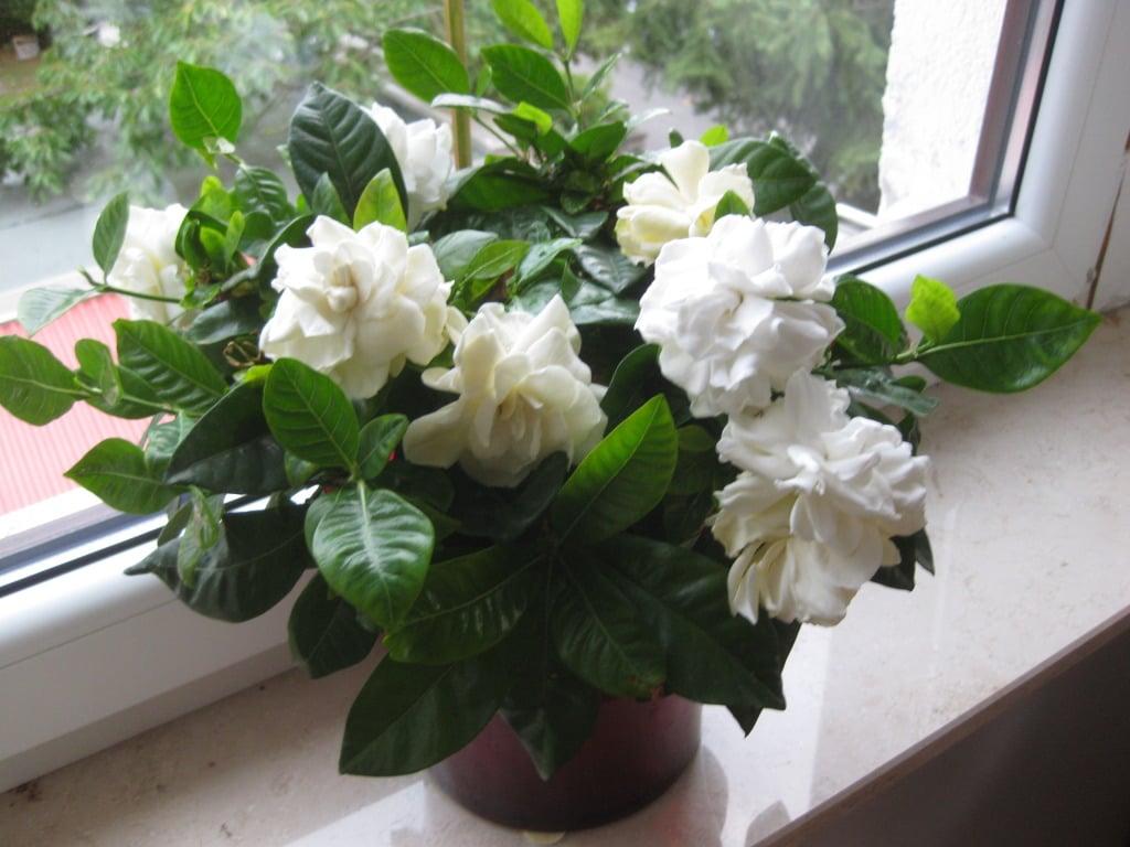 Живые цветы для женщины козерога подарок жене на новый год екатеринбург