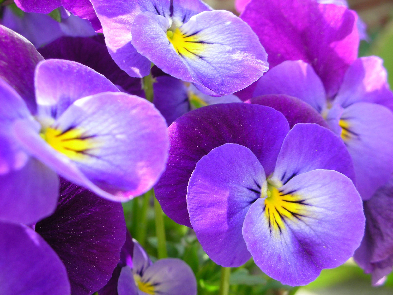 Цветок по гороскопу для тельцов