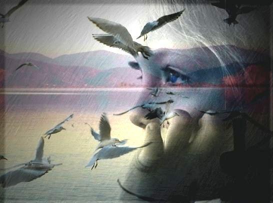 Птицы и взгляд