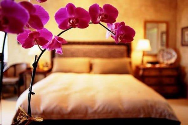 Орхидея в комнате